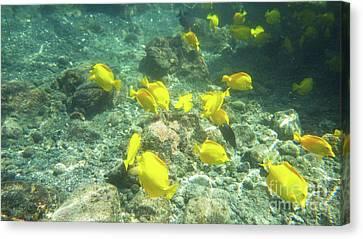 Canvas Print - Underwater Yellow Tang by Karen Nicholson