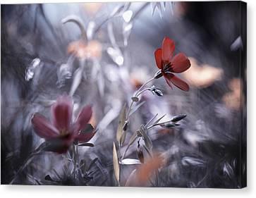 Une Fleur, Une Histoire Canvas Print by Fabien Bravin