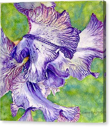 Unfolding-iris Canvas Print by Nancy Newman
