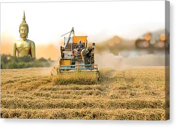 Angthong Canvas Print - Unidentified Man With Harvester Machine To Harvest Rice Field An by Suwinai Sukanant