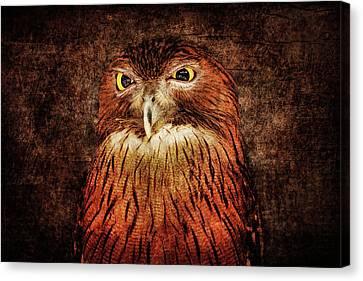 Unimpressed Canvas Print by Andrew Paranavitana