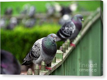 Union Square Pigeons Canvas Print by James B Toy