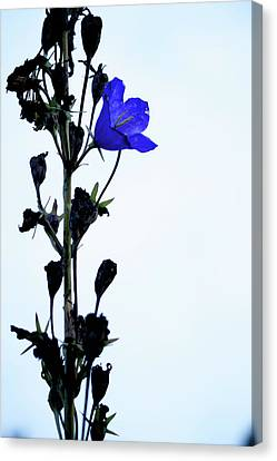 Unique Flower Canvas Print
