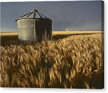United States, Kansas Wheat Field Canvas Print by Keenpress