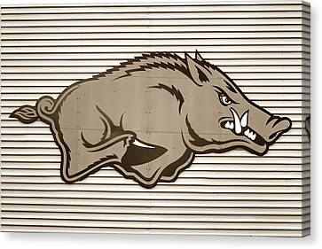 University Of Arkansas Razorback On Metal - Sepia Edition Canvas Print by Gregory Ballos
