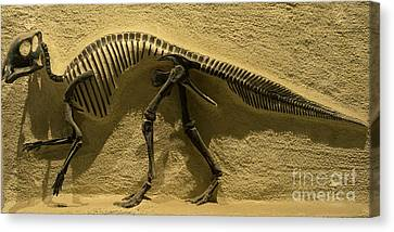 University Of California Berkeley Dinosaur Fossil Inside The Valley Life Sciences Building Dsc4640 Canvas Print by Wingsdomain Art and Photography