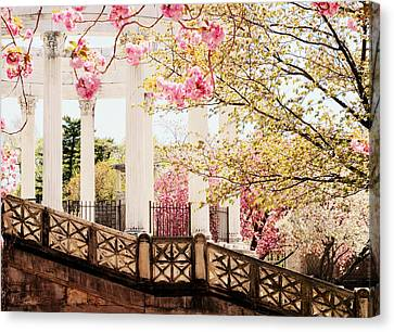 Untermyer Cherry Blossoms Canvas Print by Jessica Jenney