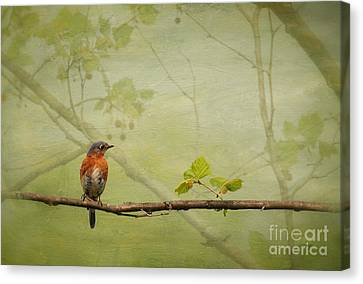 Bluebird Canvas Print - Until Spring by Lois Bryan
