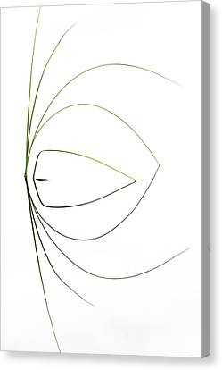 Untitled Canvas Print by Dirk Heckmann