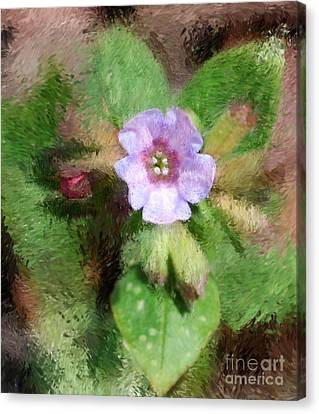 Untitled Floral -1 Canvas Print by David Lane