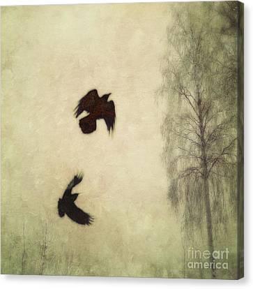 Blackbird Canvas Print - Untitled by Priska Wettstein