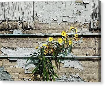 Canvas Print featuring the digital art Up Against The Wall by Ellen Barron O'Reilly