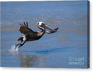 Bif Canvas Print - Up And Away by Debra Martz