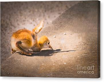 Up And Over The Curb Canvas Print