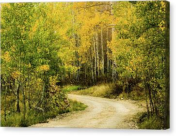 Up Around The Bend Canvas Print by TL Mair