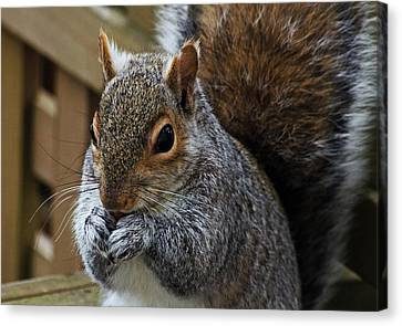 Up Close And Personal Canvas Print by Jeff Galbraith
