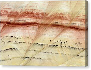 Canvas Print featuring the photograph Up Close Painted Hills by Greg Nyquist