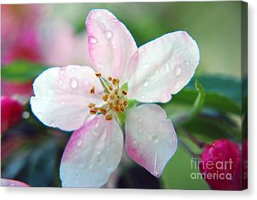 Canvas Print featuring the photograph Up Close Spring Blossom  by Lila Fisher-Wenzel