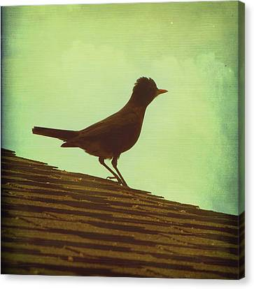 Up On A Roof Canvas Print by Amy Tyler