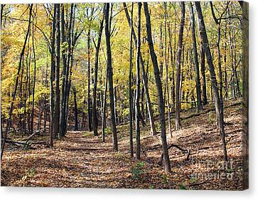 Up The Woodland Trail Canvas Print