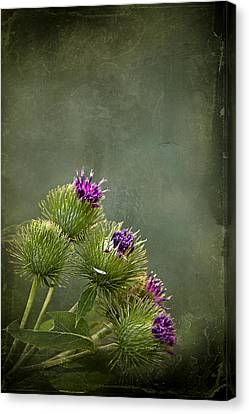 Thistle Canvas Print - Up To The Point by Evelina Kremsdorf