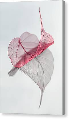 Red Leaf Canvas Print - Uplifted by Maggie Terlecki