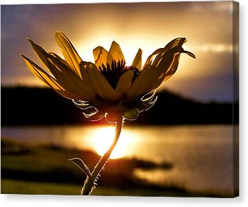 Uplifting Canvas Print