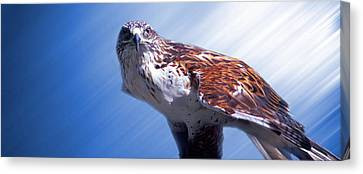 Upon His Perch Canvas Print by Greg Slocum