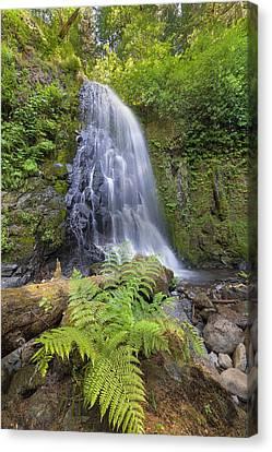 Upper Mccord Creek Falls Canvas Print by David Gn
