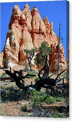 Canvas Print featuring the photograph Upward by Bruce Gourley