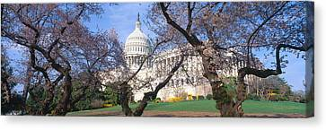 Us Capitol Building And Cherry Canvas Print