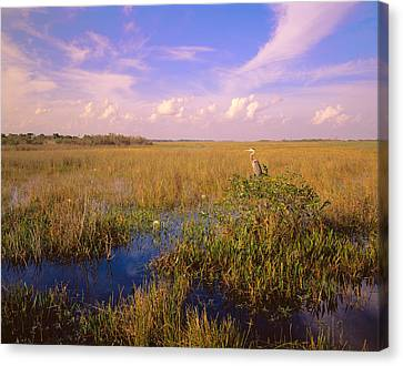 Everglades National Park Canvas Print - Usa, Florida, Everglades National Park by Panoramic Images