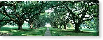 Usa, Louisiana, New Orleans, Brick Path Canvas Print