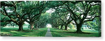 Usa, Louisiana, New Orleans, Brick Path Canvas Print by Panoramic Images