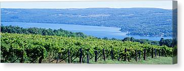 Grape Vines Canvas Print - Usa, New York, Finger Lakes, Vineyard by Panoramic Images