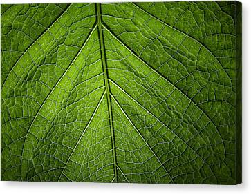 Canvas Print featuring the photograph Usbg Leaf One by Kevin Blackburn