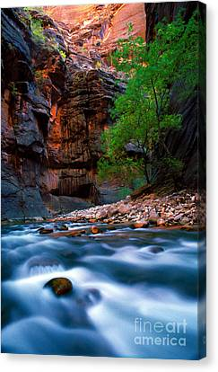 Utah - Virgin River 4 Canvas Print