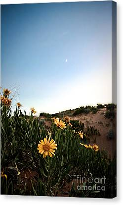 Utah Coral Sand Dune Flowers Canvas Print by Ryan Kelly