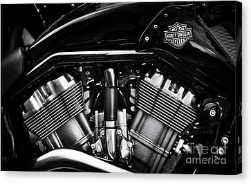 V Rod Muscle Canvas Print