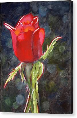 Valentine Rose Canvas Print by Christopher Reid
