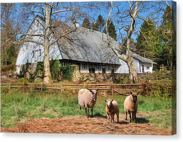 Valley Forge Sheep Farm Canvas Print by Lori Deiter