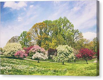 Canvas Print featuring the photograph Valley Of The Daffodils by Jessica Jenney