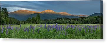 Valley Way Lupine Sunset Canvas Print