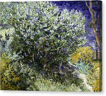 Van Gogh: Lilacs, 19th C Canvas Print by Granger