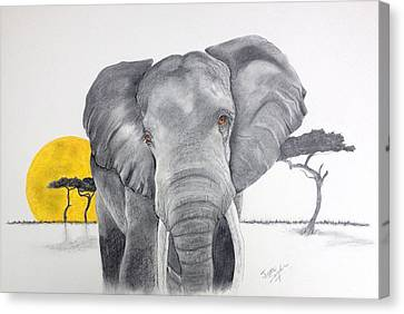 Vanishing Elephant Canvas Print