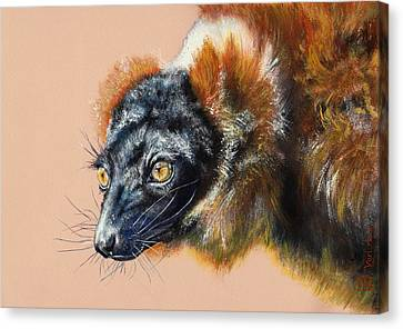 Vari Roux Canvas Print