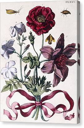 Various European Insects And Flowers Canvas Print by Maria Sibylla Graff Merian