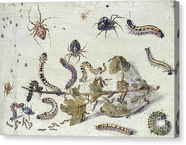 Nature Study Canvas Print - Various Spiders And Caterpillars, With A Sprig Of Gooseberry by Jan Van Kessel