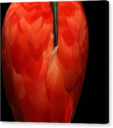 Canvas Print featuring the photograph Vase-shaped Bird by Emanuel Tanjala