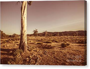 Vast Pastoral Australian Countryside  Canvas Print